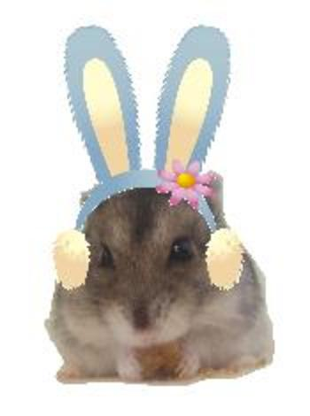 11_01_bunny_vanira